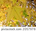深秋 晚秋 著色 2057976