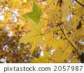 深秋 晚秋 著色 2057987