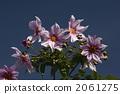 꽃, 식물, 꽃잎 2061275