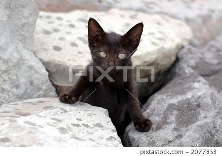 Stock Photo: pussy, animals, animal
