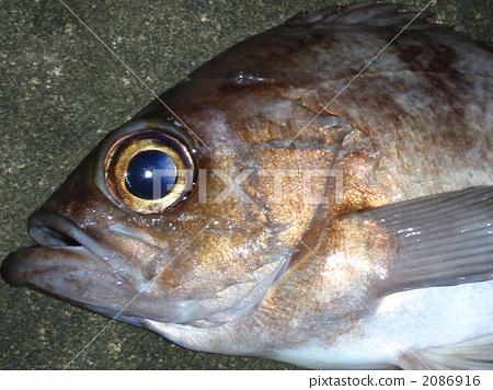 생선, 물고기, 바다 2086916