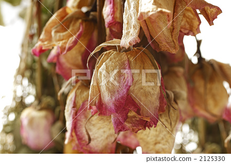 Dried flower 2125330