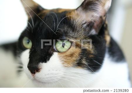 Mikane cat 2139280
