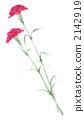 Carnation 2142919