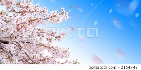 벚꽃, CG, 합성 2154742