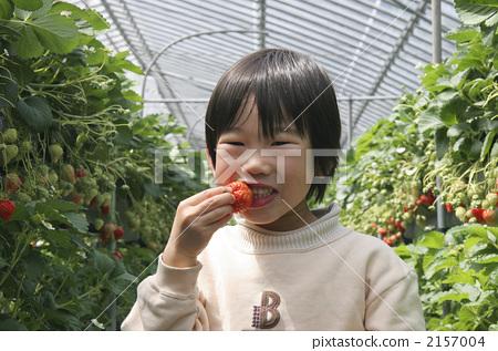 딸기 따기 2157004
