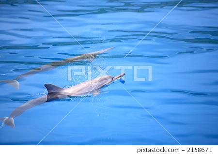 Dolphin 2158671