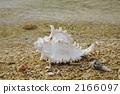 Tenguai在海灘 2166097