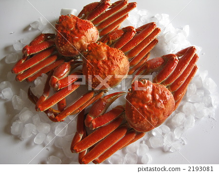 Echizen crab 2193081