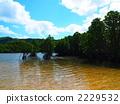 mangrove 2229532