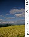 小麥地 田園 田園風景 2231117