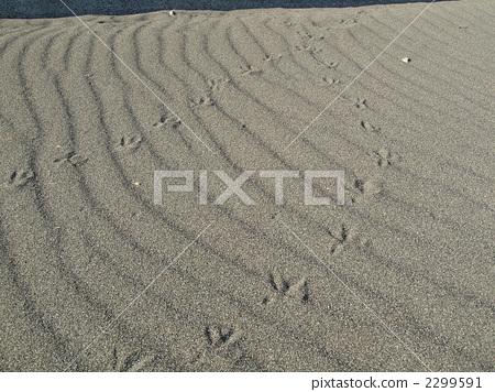 รอยเท้า,หาดทราย,ทัศนียภาพ 2299591