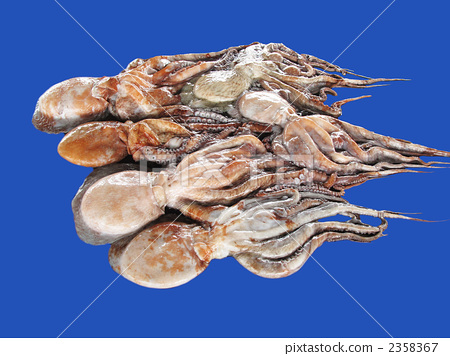 Water octopus 2358367