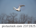 Co swans 2372825