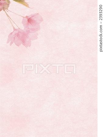 Cherry Blossoms 2393290
