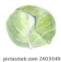 cabbage 2403049