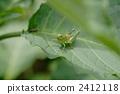중베짱이, 메뚜기, 곤충 2412118