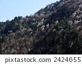 风景 森林 树林 2424655