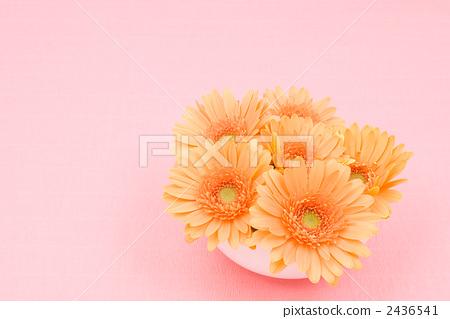 Orange Gerbera Flower 2436541