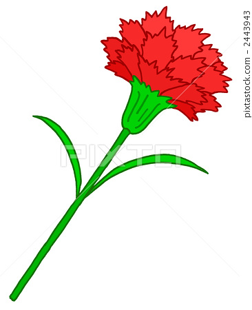 Carnation.1 2443943