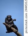 Chimpanzee 2444562