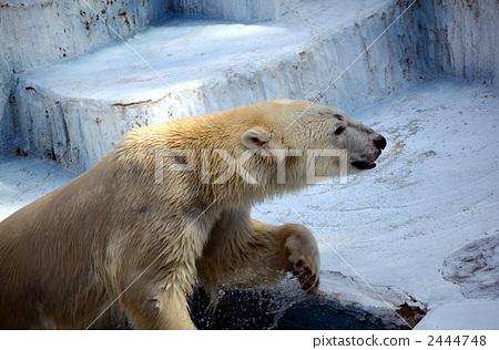 tennoji zoo, bear, bears 2444748