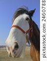 馬的臉 2460788