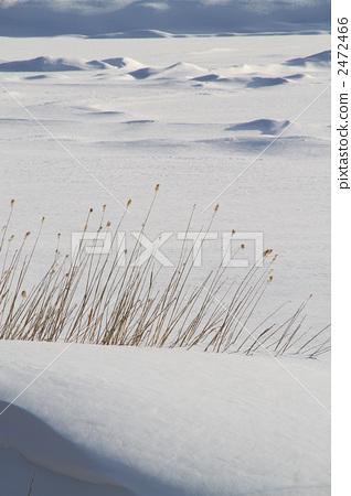冬季Kirigamine高原 2472466