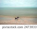在海邊的海鷗 2473833