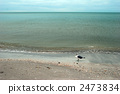 在海邊的海鷗 2473834