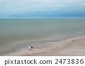 在海邊的海鷗 2473836