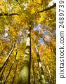 ป่าที่สวยงามของ Matsunoyama 2489739