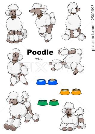 poodle 2500693