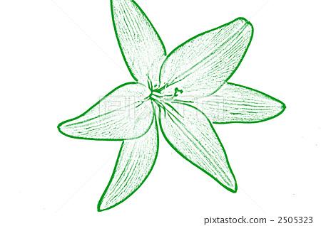 식물, 흰색 배경, 흰 배경 2505323
