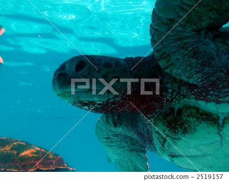 팔라우의 바다 거북 2519157