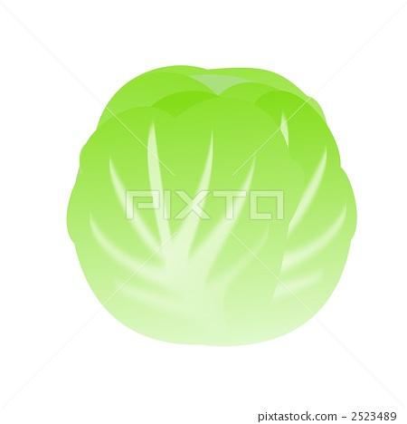 cabbage 2523489