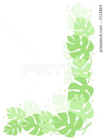 몬스테라, 봉래초, 잎 2524884