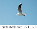 migratory, bird, black-headed 2531320