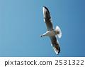 gull, sea, migratory 2531322