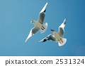 migratory, bird, black-headed 2531324