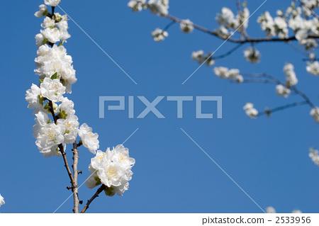 White flower and flower of blue sky 2533956