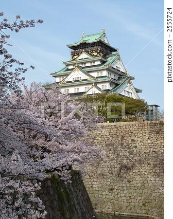 Osaka Castle and Sakura in full bloom 2555724