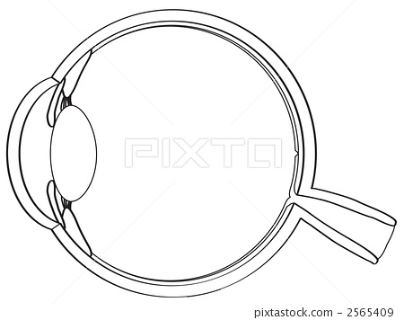 Sectional View Of The Eye
