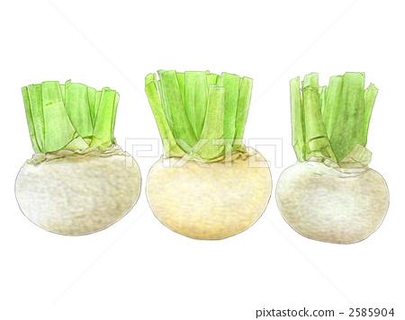 radish, beet, Root Vegetables 2585904