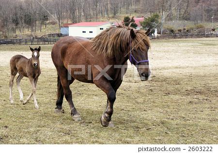 Horse parent and child 2603222