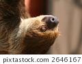 Lid prairie sloth 2646167