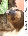 Lid prairie sloth 2646359