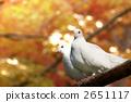 白鴿 2651117