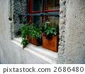 愛沙尼亞塔林的舊城窗口 2686480