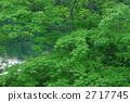 虾虎鱼 山漆 树 2717745